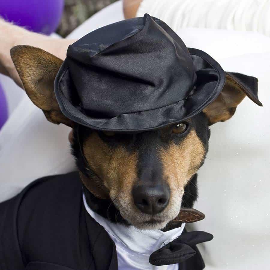 huisdier trouwdag bruiloft fotografie trouwreportage poes hond