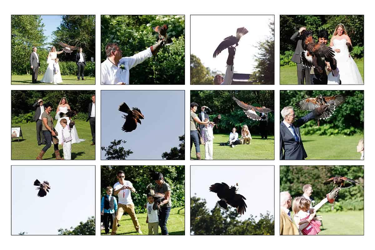 Roofvogels op de bruiloft