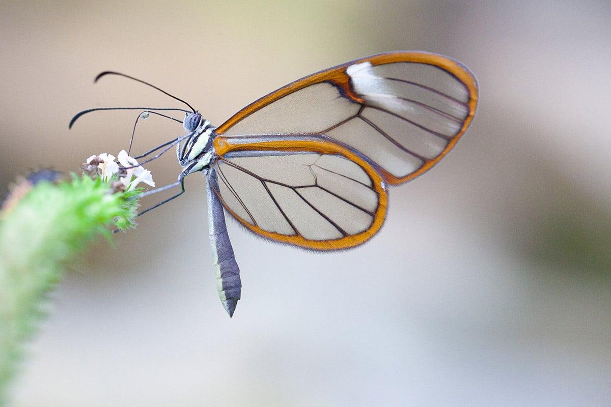 vlinder Artis Amsterdam
